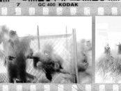 Savageland-Attack-Still-Phil-Guidry